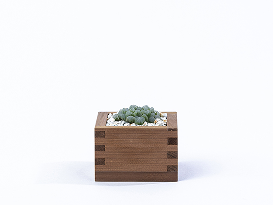 masugreen_cactus